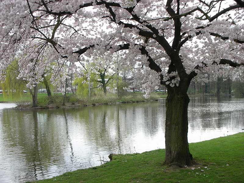 на тему весна картинки