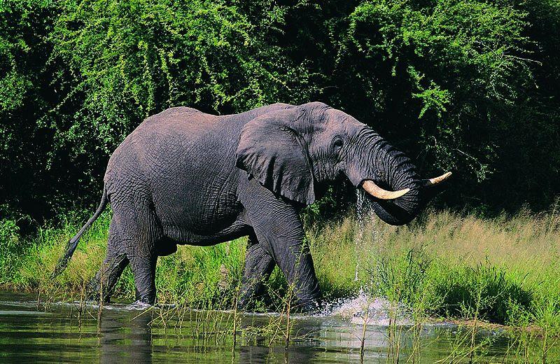 пишет картинки к презентации слоны фон фотографии